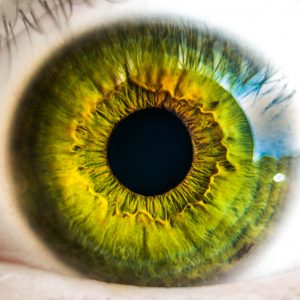 Nahaufnahme eines Auges - Optik Westermeier