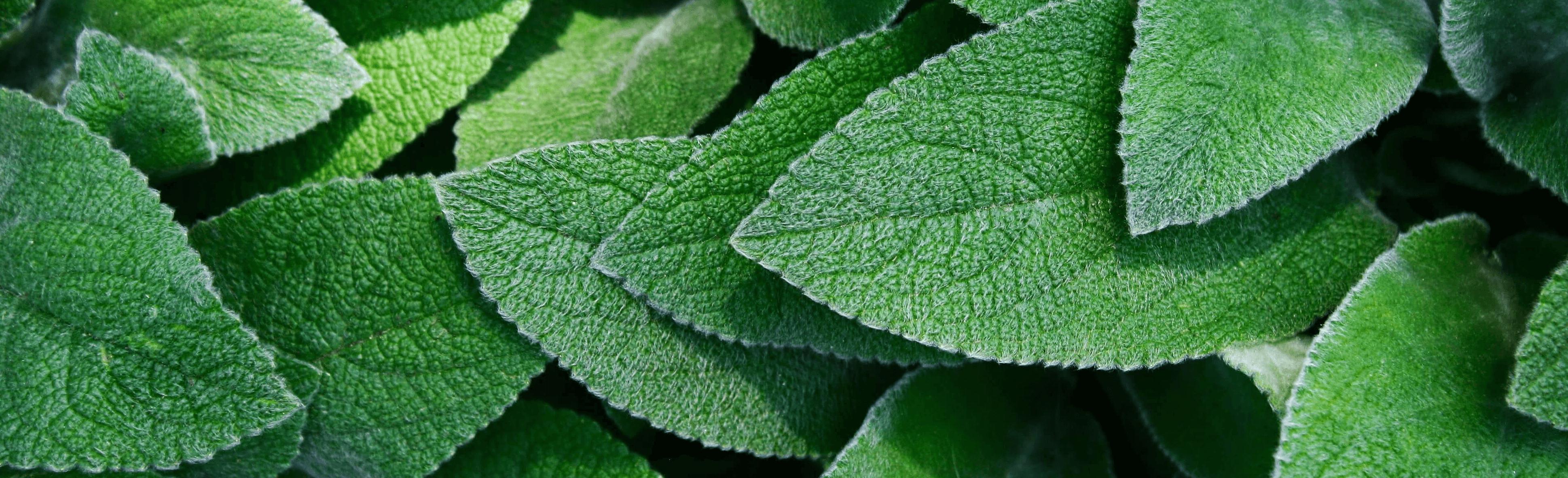 blatter-botanisch-botanischer-garten-1113145