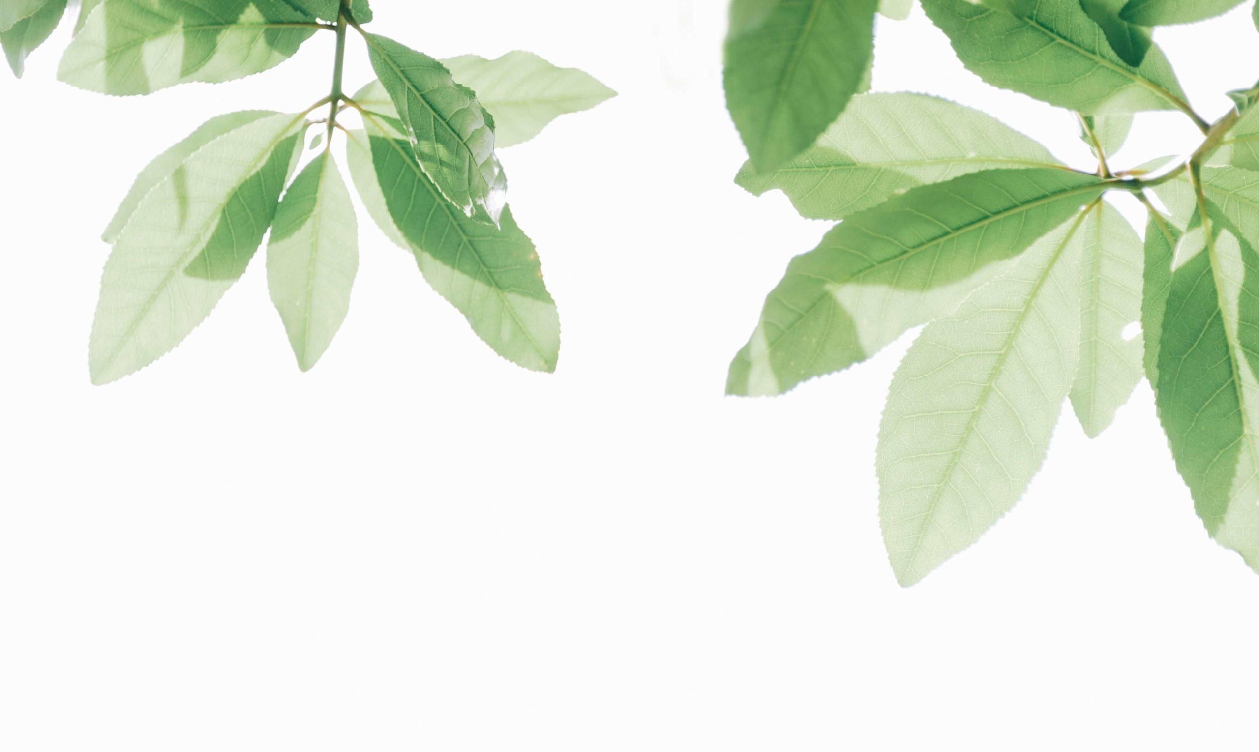 Blätter als Sinnbild für die Ecollection von Esprit